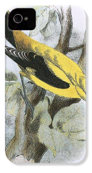 Golden Oriole IPhone 4 Case by English School