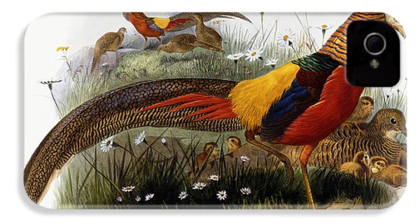 Golden Pheasants IPhone 4 Case by Joseph Wolf