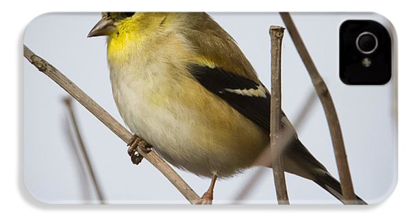 IPhone 4 Case featuring the photograph Goldfinch In It's Winter Coat by Ricky L Jones