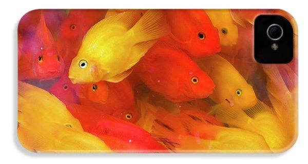 Goldfish At Goldfish Market, Hong Kong IPhone 4 Case