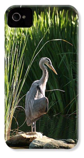Great Blue Heron IPhone 4 Case by Ellen Henneke