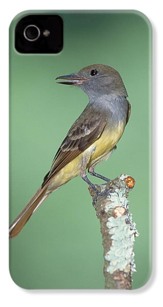 Great Crested Flycatcher Myiarchus IPhone 4 Case