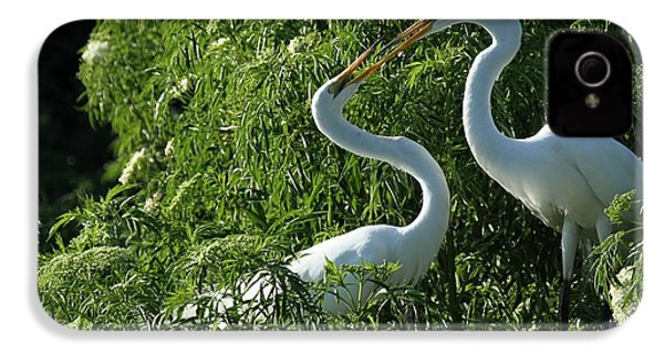 Great White Egret Lovers IPhone 4 Case by Sabrina L Ryan
