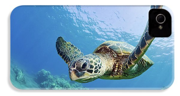 Green Sea Turtle - Maui IPhone 4 Case by M Swiet Productions