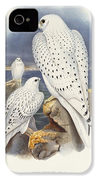 Greenland Falcon IPhone 4 / 4s Case by John Gould
