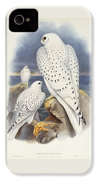 Greenland Falcon IPhone 4 Case by John Gould