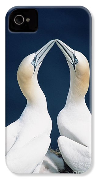 Greeting Northern Gannets Canada IPhone 4 / 4s Case by