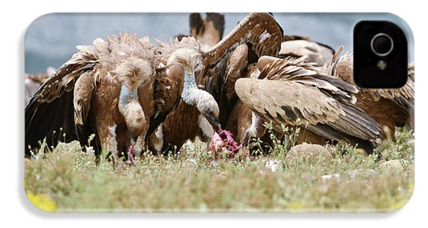 Griffon Vultures Scavenging IPhone 4 Case by Dr P. Marazzi