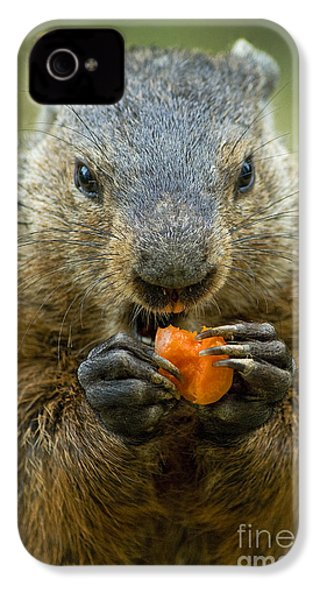 Groundhogs Favorite Snack IPhone 4 Case