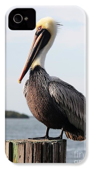 Handsome Brown Pelican IPhone 4 Case by Carol Groenen