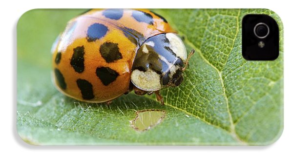 Harlequin Ladybird IPhone 4 Case by Heath Mcdonald