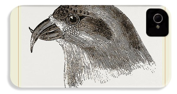 Head Of Crossbill IPhone 4 / 4s Case by Litz Collection