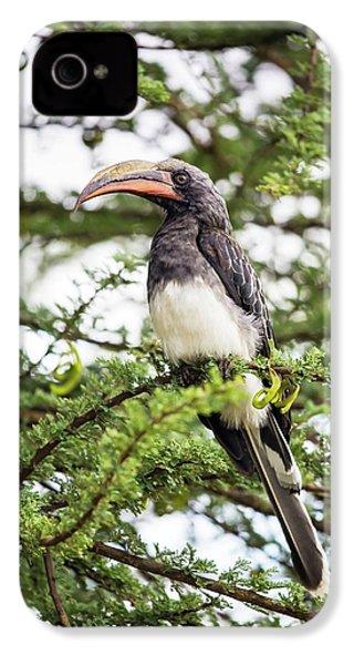 Hemprichs's Hornbill (tockus Hemprichii) IPhone 4 Case by Peter J. Raymond