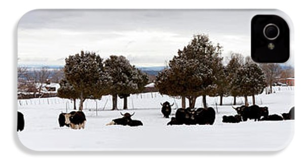 Herd Of Yaks Bos Grunniens On Snow IPhone 4 Case by Panoramic Images