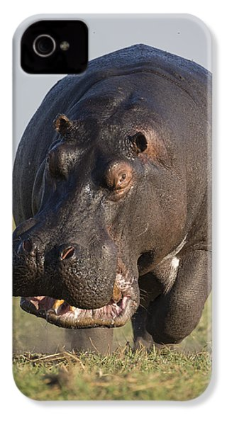 Hippopotamus Bull Charging Botswana IPhone 4 / 4s Case by Vincent Grafhorst