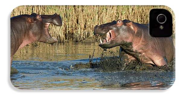 Hippopotamus Confrontation IPhone 4 / 4s Case by Tony Camacho