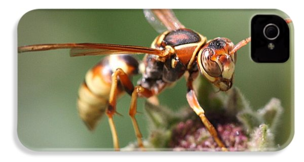 IPhone 4 Case featuring the photograph Hornet On Flower by Nathan Rupert
