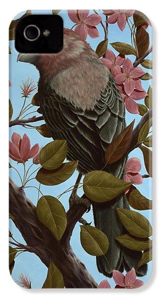 House Finch IPhone 4 / 4s Case by Rick Bainbridge
