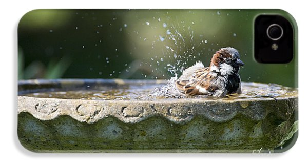 House Sparrow Washing IPhone 4 Case by Tim Gainey