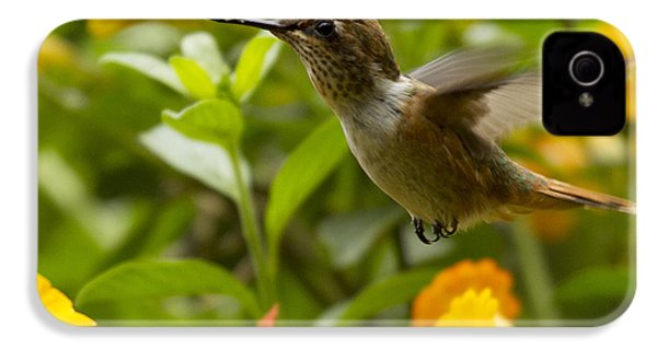 Hummingbird Looking For Food IPhone 4 Case by Heiko Koehrer-Wagner