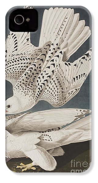 Illustration From Birds Of America IPhone 4 / 4s Case by John James Audubon