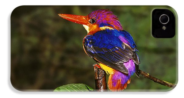 India Three Toed Kingfisher IPhone 4 Case by Anonymous