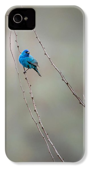 Indigo Bunting IPhone 4 Case by Bill Wakeley