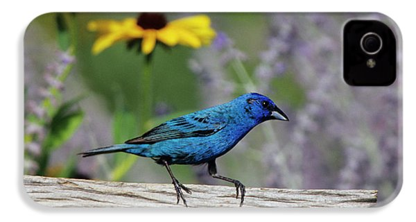 Indigo Bunting (passerina Cyanea IPhone 4 Case by Richard and Susan Day