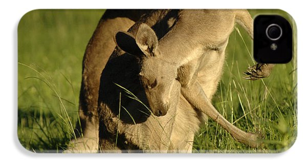 Kangaroos Taking A Bow IPhone 4 / 4s Case by Bob Christopher