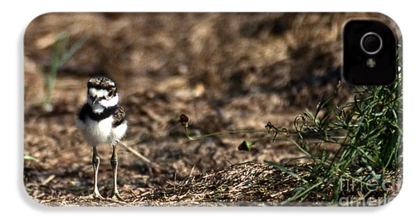 Killdeer Chick IPhone 4 Case by Skip Willits