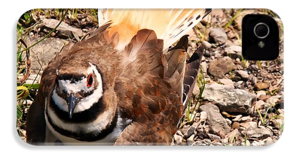 Killdeer On Its Nest IPhone 4 / 4s Case by Chris Flees