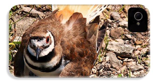 Killdeer On Its Nest IPhone 4 Case by Chris Flees