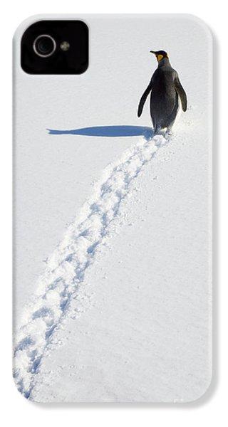 King Penguin And Tracks S Georgia Island IPhone 4 Case