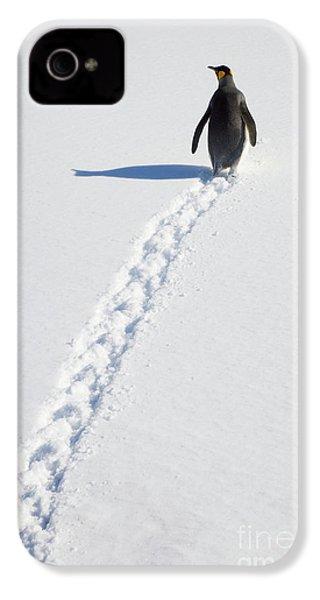 King Penguin And Tracks S Georgia Island IPhone 4 Case by Yva Momatiuk and John Eastcott