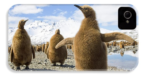 King Penguin Chicks South Georgia Island IPhone 4 Case