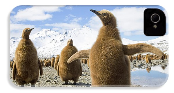 King Penguin Chicks South Georgia Island IPhone 4 / 4s Case by Yva Momatiuk and John Eastcott