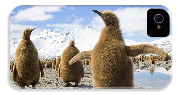 King Penguin Chicks South Georgia Island IPhone 4 Case by Yva Momatiuk and John Eastcott