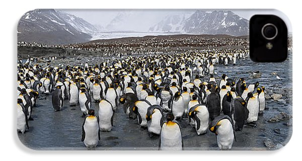 King Penguins Aptenodytes Patagonicus IPhone 4 Case by Panoramic Images