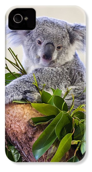 Koala On Top Of A Tree IPhone 4 Case by Chris Flees