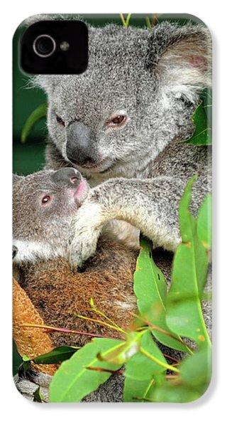 Koalas IPhone 4 / 4s Case by Bildagentur-online/mcphoto-schulz