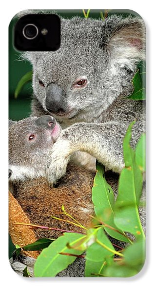 Koalas IPhone 4 Case