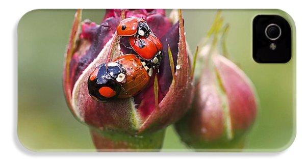 Ladybug Foursome IPhone 4 Case by Rona Black