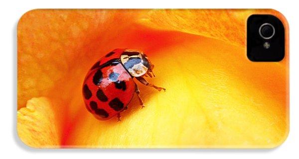 Ladybug IPhone 4 Case by Rona Black