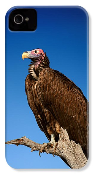 Lappetfaced Vulture Against Blue Sky IPhone 4 Case by Johan Swanepoel