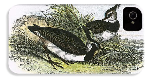 Lapwing IPhone 4 Case by English School