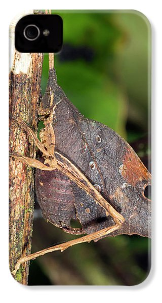 Leaf Mimic Katydid IPhone 4 / 4s Case by Dr Morley Read