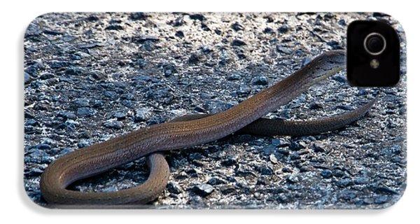 IPhone 4 Case featuring the photograph Legless Lizard Or A Snake ? by Miroslava Jurcik
