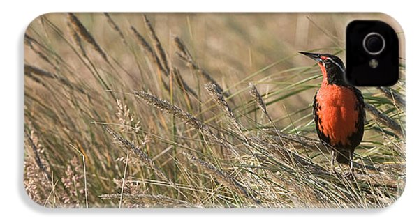 Long-tailed Meadowlark IPhone 4 Case by John Shaw