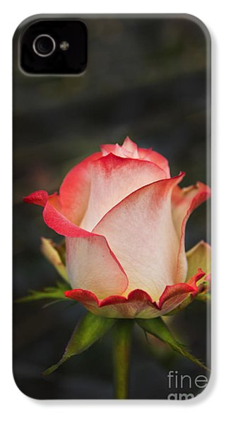 Love Is A Rose II IPhone 4 / 4s Case by Al Bourassa