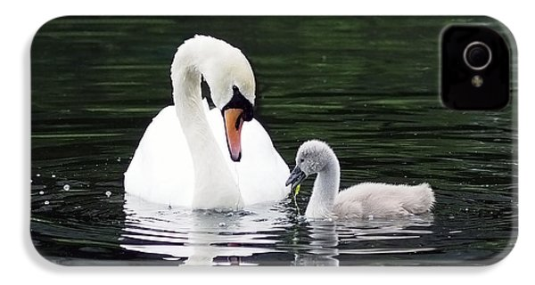 Lunchtime For Swan And Cygnet IPhone 4 Case by Rona Black